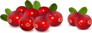 cranberries_with_leaves_312717