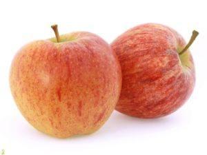galla-apple-tree
